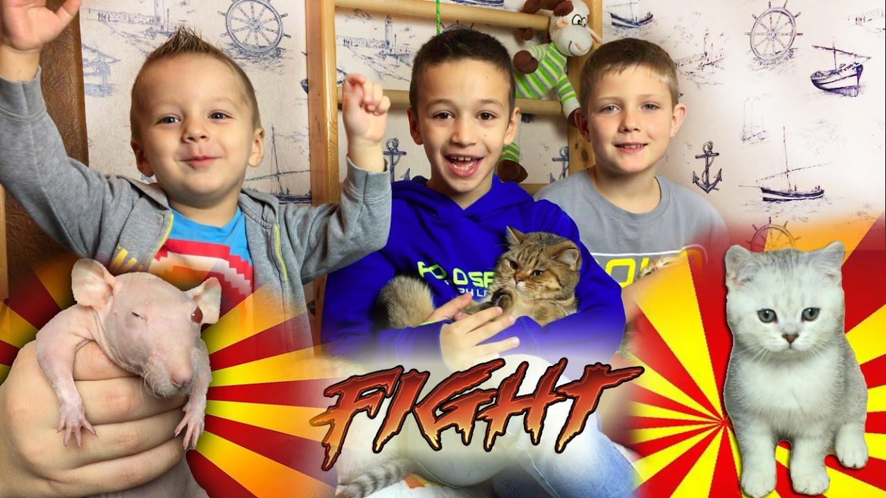 Кошка и Котята Смешные Животные для Детей Funny Cats and Kittens