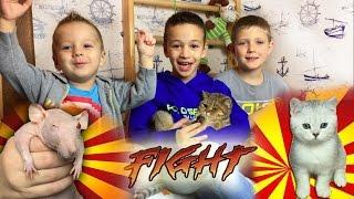 КОШКИ И КОТЫ Против Крысы Кошка и Котята Смешные Животные для Детей Funny Cats and Kittens