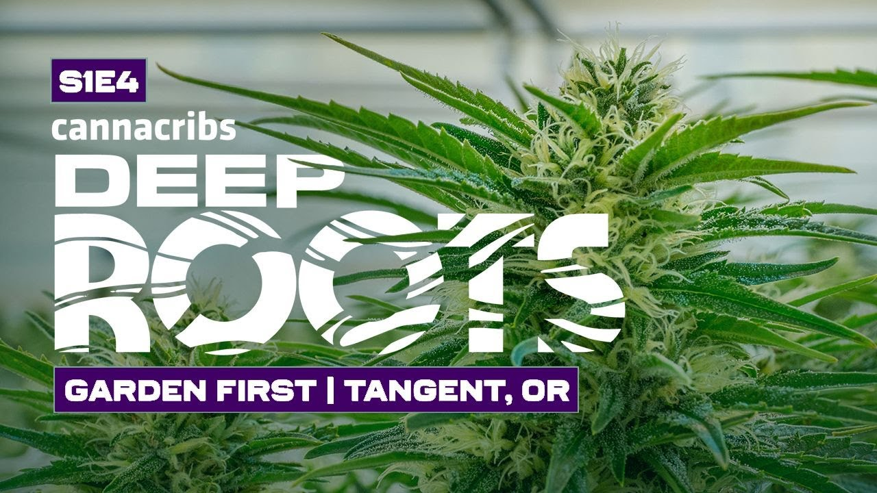 Millennial Owned Cannabis Farm in Oregon Grows Over 3 Pounds per Light!