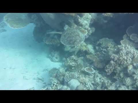 swimming-with-turtles-in-the-great-barrier-reef