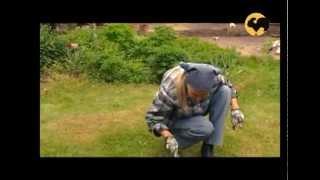 Дачная терраса. САД день за днем №3.(Вы узнаете о том, как оформить дачную террасу, как правильно ухаживать за газоном и луковичными цветами,..., 2012-07-06T10:41:31.000Z)