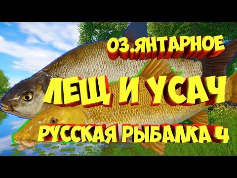 Фарм Лещ Усач Янтарное озеро рр4 русская рыбалка 4 Russian Fishing 4 Rf4 Алексей Майоров