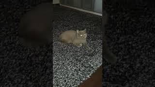Ali's cat