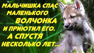 Нашёл волчонка в лесу и приютил его у себя дома. А спустя несколько лет...
