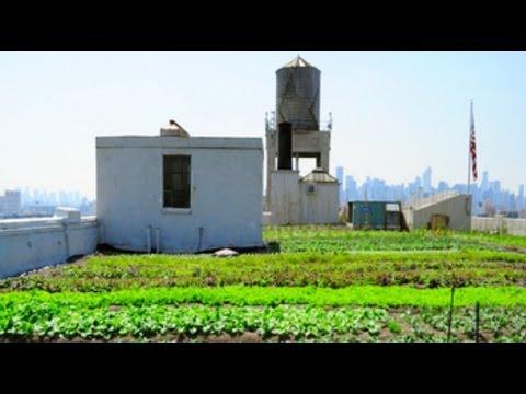 Big and green at Brooklyn Navy Yard - New York Post