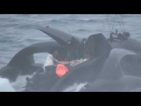Ady Gil Just Prior to being Rammed by Japanese Whalers