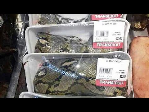 Exotic food: Snake meat is on sale at supermarket in Indonesia; LA frozen raccoons - Compilation