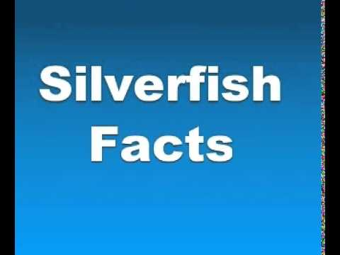 Silverfish Facts - Facts About Silverfishes