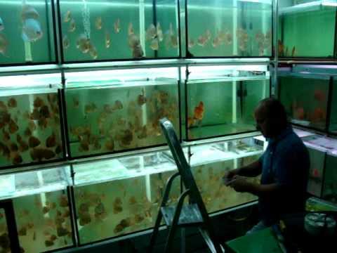 Wasserwechsel anlage diskus aufzucht doovi for Keller fish farms