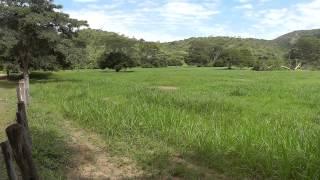 Hato Piñero, Cojedes, Venezuela (Camping). Venezuela, Rutas y Parajes