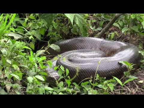 Guyana, Rewa River revisited 2017