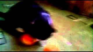 Голодный кот ;)(, 2016-01-04T15:03:25.000Z)