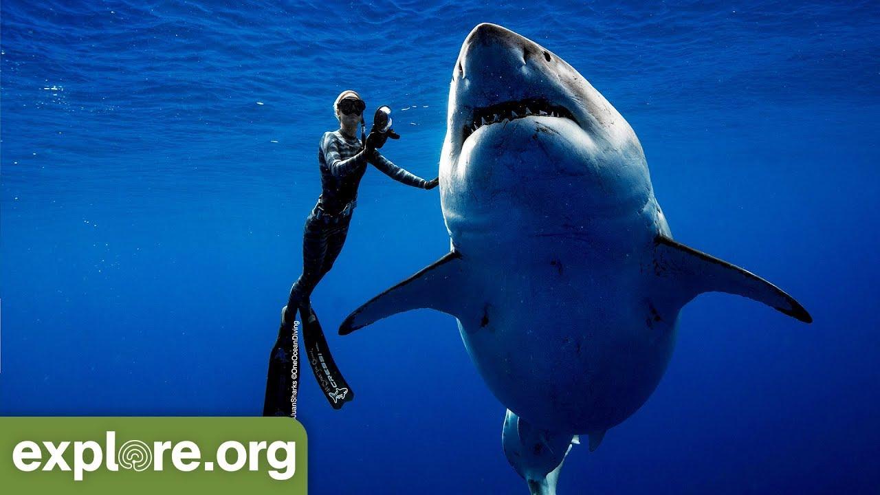 Who Is The Deep Blue Shark