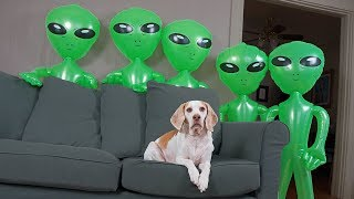 dog-unimpressed-by-alien-invasion-funny-dog-maymo