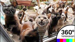 Более 30 кошек проживают в квартире на юго-востоке Москвы