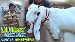 Lalukhet Bakara mandi Latest Updates 30-9-2018 (Jamshed Asmi Informative Channel) In Urdu/ Hindi