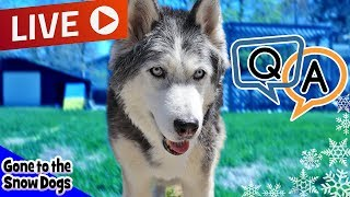 LIVE Q & A with the Huskies of Gone to the Snow Dogs