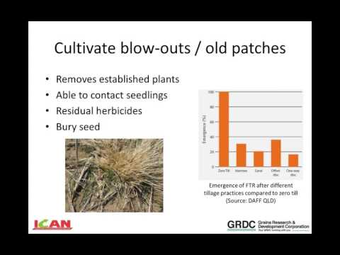 Ecology and management of feathertop Rhodes grass