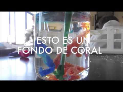 proyecto laboratorio de quimica jardin quimico youtube