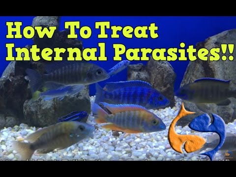 How To Treat For Internal Parasites In Your Fish Part 1