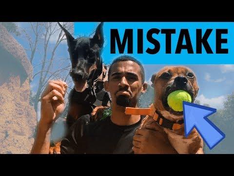 THIS WAS A MISTAKE...Doberman Pitbull Vlog
