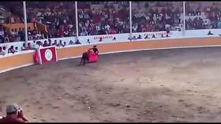 Perro en novillada. Feria Tlahuelilpan 2015
