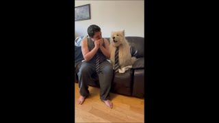 Dog Wearing a Tie Howling as Owner, Wearing a Tie, Plays Music for Him