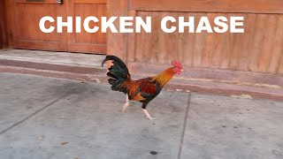 I CHASED A CHICKEN IN THE STREETS OF TAMPA | DRUMMER ON TOUR VLOG