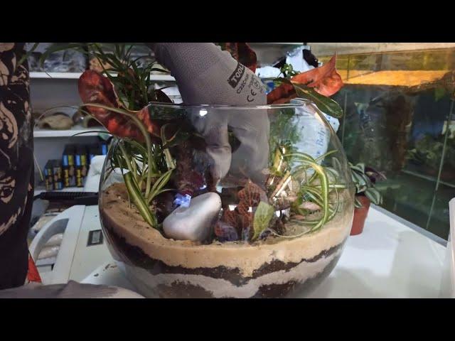 Open Jar Terrarium Set up Θεωρία και πράξη  Planters ep2