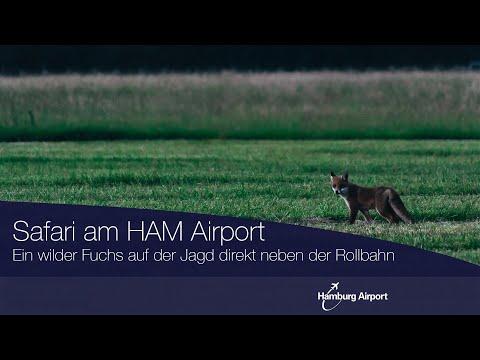 Fuchs auf der Jagd | Hamburg Airport