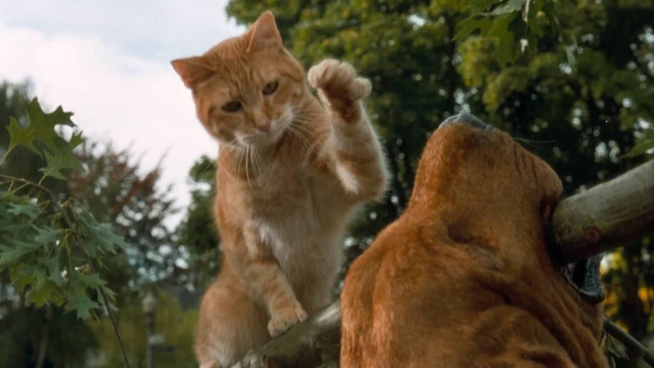 Cats  U0026 Dogs - Trailer