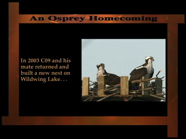 Outcome of the Osprey Reintroduction Program at Kensington Metropark