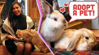 Hedgehog, Bunny & Cat Cafes from Japan! National Adopt A Pet Day!