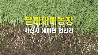 서산 달래재배농장