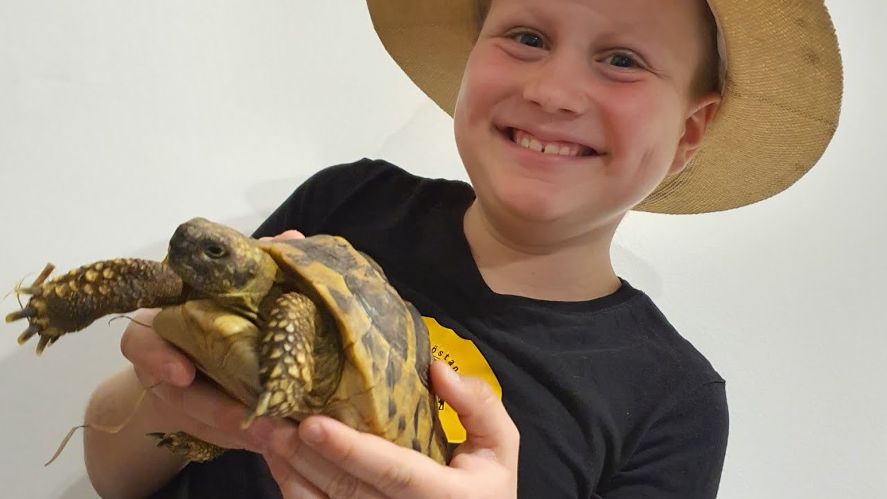 teknős fogyni