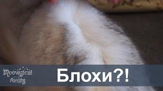Как узнать есть ли у кошки блохи?