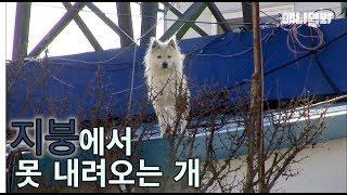 난 겁쟁이가 아니에요 ㅣ Tearful Story Of A Great Dog Who Can't Come Down From The Roof