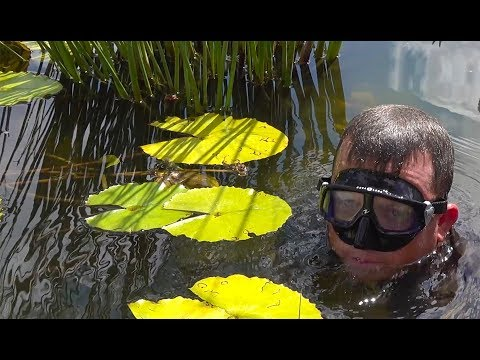SNORKELING with my CRAZY fish in the above ground SWIM POND