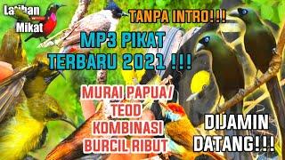 Download Mp3 MP3 PIKAT MURAI IRIAN BURUNG CENTRONG DEOT KOMBINASI BURCIL TERBARU
