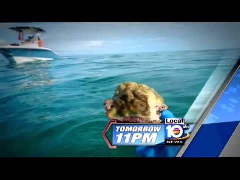 Bimini Bay (Resorts World Bimini) story by ABC News