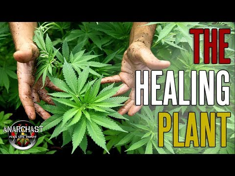 The Cannabis Conspiracy and What They Don't Want You To Know About This Miraculous Plant Medicine