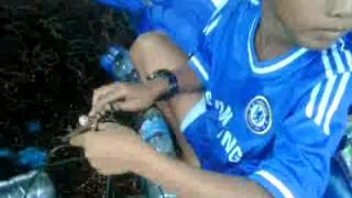 Download Video Ibu-ibu sedang mamasang bibit rumput laut di kampung mamolo Nunukan MP3 3GP MP4