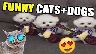 Funny Cats ¦ Funny Dogs ¦ Cute Animals Compilation ¦