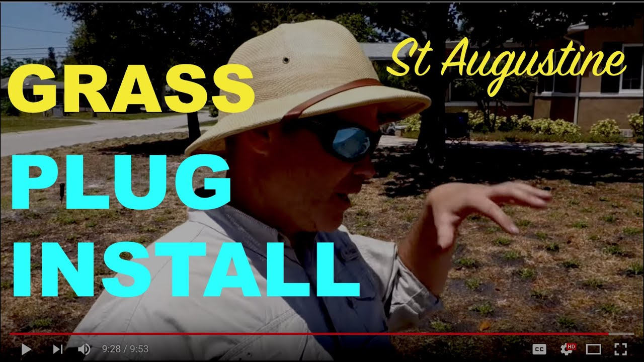 How To Install St Augustine Grass Plugs - YouTube