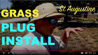 How To Install St Augustine Grass Plugs