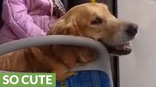 Little girl naps with her doggy during bus ride