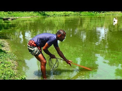 Net Fishing | Catching Fish With Cast Net | Net Fishing in the village (Part-286)