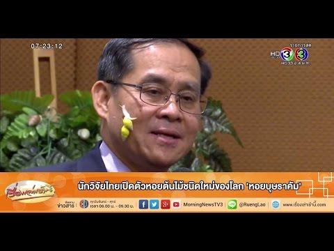 เรื่องเล่าเช้านี้ นักวิจัยไทยเปิดตัวหอยต้นไม้ชนิดใหม่ของโลก 'หอยบุษราคัม' (10 ก.ย.58)