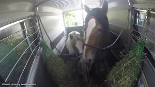 Good Life Stables ~ Trailer Training a.k.a Preparing for their trip to Sweden!