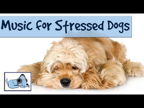 Music to Relax and Soothe your Stressed Dog - Music Therapy for Dogs